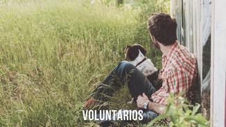 Cómo ser voluntario de la protectora APASA