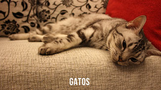 Cuidados básicos del gato