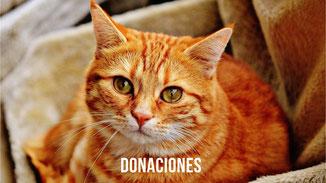 Cada donación nos permite ayudara a más animales