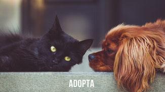 Perros y gatos en adopción Asturias