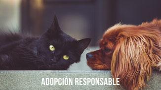 Adoptar un perro o un gato en Asturias