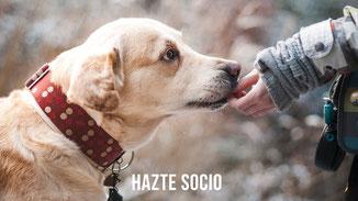 HAZTE SOCIO  PROTECTORA APASA