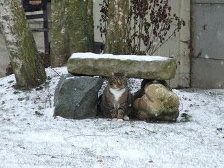 salem sous la neige