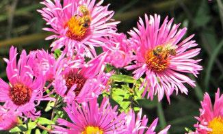 Bienen Biologische Vielfalt in der Stadt
