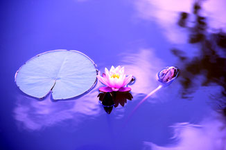 meditation image of lotus, offering basics of breath, mantra. & visualization