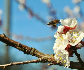 prairie;fleurs;miel;apiculture;gers;bio;hors cadre apiculture;boulaur