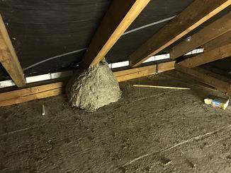 Großes Wespennest | Dachboden