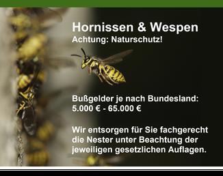 Bild: Hornissen & Wespen