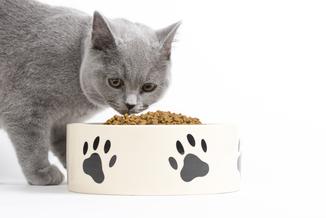 Katzen-Blog: Richtige Haltung von Katzen