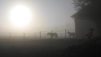 Anforderungen im Pferdetraining - zu viel vom Pferd verlangt?