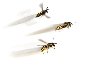 Wespen biologische vertrieben durch Wasp fly home Wespenspray
