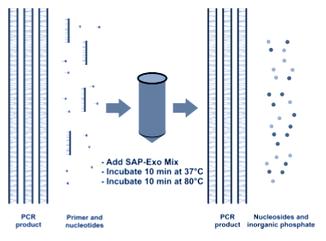 PCR clean up kit, RSAP, Exonuclease , shrimp