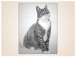 auftragsmalerei-inna-bredereck-kohlezeichnung-kater-gemaelde-katzenportrait-kunstwerk