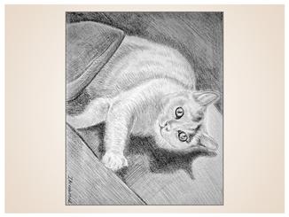 auftragsmalerei-inna-bredereck-kohlezeichnung-gemaelde-katze-decke-kater-katzenportrait-kunstwerk