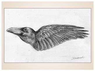 inna-bredereck-auftragsmalerei-kunstwerk-skizze-tattoo-aktzeichnung-rabe-kraehe-vogel-fluegel