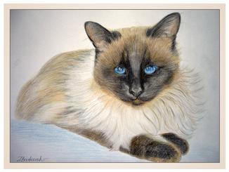 auftragsmalerei-inna-bredereck-farbstifte-gemaelde-siamkatze-blaue-augen-katzenportrait-kunstwerk