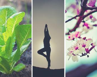seminari, workshop, olistico, automassaggio, dò in, fiori di bach, corsi di orticoltura biologica, workshop fiori di bach