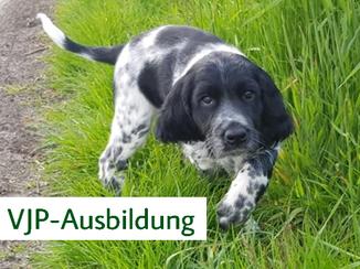 Hunt & Hound - Jagdhundeseminare Verbandsjugendprüfung VJP