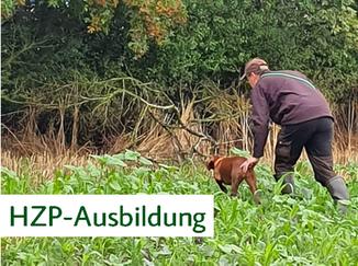 Hunt & Hound - Jagdhundeseminare Herbstzuchtprüfung HZP