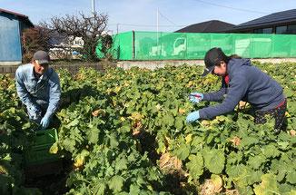 綺麗に切り揃えられた菜花を持つ齊藤さん(写真右)