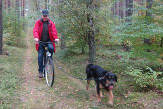 Rad fahrender Hund