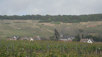 The village of Oger and vineyards of the Cote De Blancs