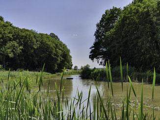 A 10 mn du gîte, étang au coeur de la nature