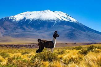 Atacamawüste, Chile, Reisetipps, Reiseführer, Sehenswürdigkeiten, Wissenswertes, Die Traumreiser