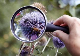 """Eine Lupe hilft bei der Insekten-""""Inventur"""". Foto: Nabu Archiv"""