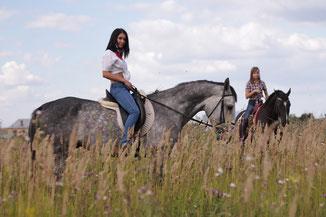 Катание на лошадях в поле
