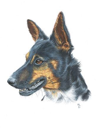 Portrait James Dean crayons couleur