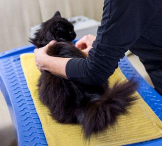 chat-angora-turc-noir-sur la-table-de-toilettage