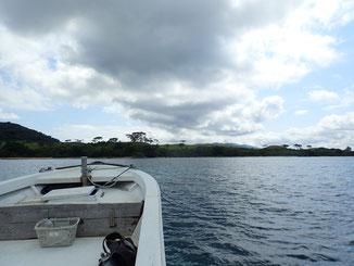 石垣島でのんびりダイビング「営業自粛」ヒートハートクラブ