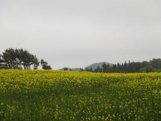 今日は、鳥海山が見えません・・・(/_;)