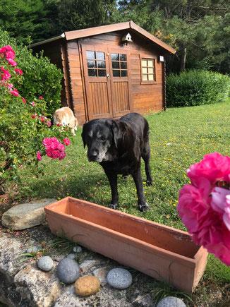 Garten des Ferienhauses Coup de Coeur mit Hund