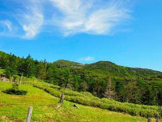 トミーワンハイキング 北横岳・縞枯山