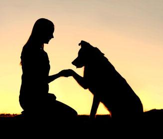 Grenzschutzhunde