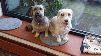 Teddy und Wuschel