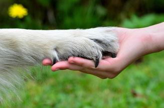 Innervise® für Tiere im Saarland bei Christian Schmidt in Saarlouis