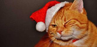 lustige Weihnachtsgedichte: Katerweihnachten