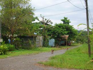 Karibische Straßenszene