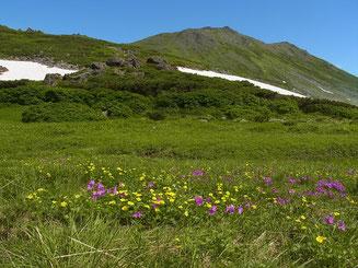 トムラウシ公園のお花畑。右がトムラウシ山。