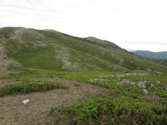 ササの枯れた根が広がる経塚山からの霊仙山本峰(右奥)