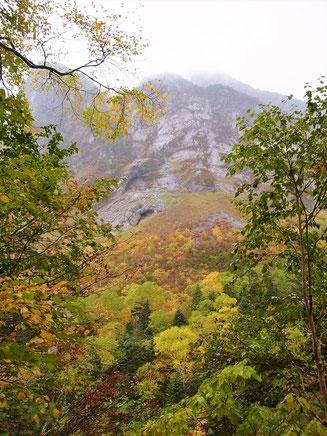 屏風岩を見上げる。下部は紅葉真っ盛り。
