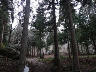 大木に囲まれたツルベ谷出合