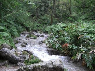水量が多く綺麗な谷