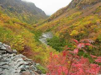 横尾本谷方面の紅葉