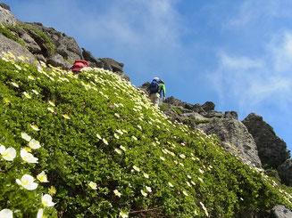 山頂直下岩場のチングルマと登山者