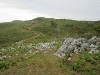 山頂部はササでなくベニバナボロギク優占ですっかり見通し良く