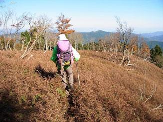 さあ、駒ヶ岳東尾根を下りるぞ~。 イワヒメワラビ畑?